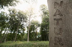 Word nature carved on a tree trunk, Bavaria, Germany