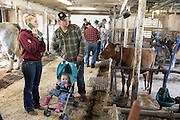 Casey Holbert and Rick Donahoe, of Clayville, N.Y., browse calves with their daughter Brynlee, 1, in the Green Acres barn before the herd dispersal auction Saturday, May 14, 2016. Holbert bought a Green Acres calf two years ago and returned as a bidder for the auction. (Valley News - James M. Patterson) Copyright Valley News. May not be reprinted or used online without permission. Send requests to permission@vnews.com.