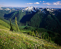 Meadows along the Pacific Crest Trail looking down to the North Fork Sauk River Valley, Glacier Peak Wilderness Washington USA