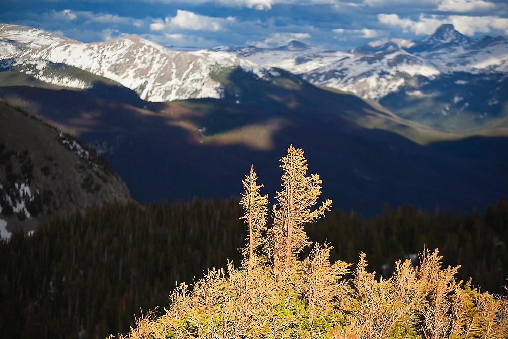 Late afternoon light illuminates alpine evergreen trees above Parika Lake in the Never Summer Wilderness, Colorado. The peaks of Rocky Mountain National Park are visible in the distance.