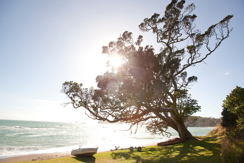 Light through pohutakawa tree with dingy  pulled up onto shore Tide washing at Moureeses Bay, East Coast, Far North, New, Zealand.