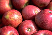Close up selective focus photograph of a pile of Winesap apples