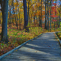 New England walk in the park at Green Hill Park in Worcester, MA featuring fall colors on a beautiful October picture perfect fall day. Autumn foliage showing their stunning display along a boardwalk leading the way. The urban greenspace provides local recreation and is located atop one of Worcester's seven main hills. The public park is home to the Massachusetts Vietnam Veterans' Memorial. <br />