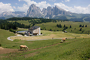 Skiing hotel in summer and horses on the Siusi plateau, above the South Tyrolean town of Ortisei-Sankt Ulrich in the Dolomites, Italy. The Alpe di Siusi is the biggest high-alpine pasture in Europe with a surface of 57 km² and its altitude range from 1680 to 2350 m above sea level. This high-alpine pasture is located in the heart of the Dolomites. A mostly older generation of farmers work the land in this high area, known for its summer hiking trails and skiing pistes.