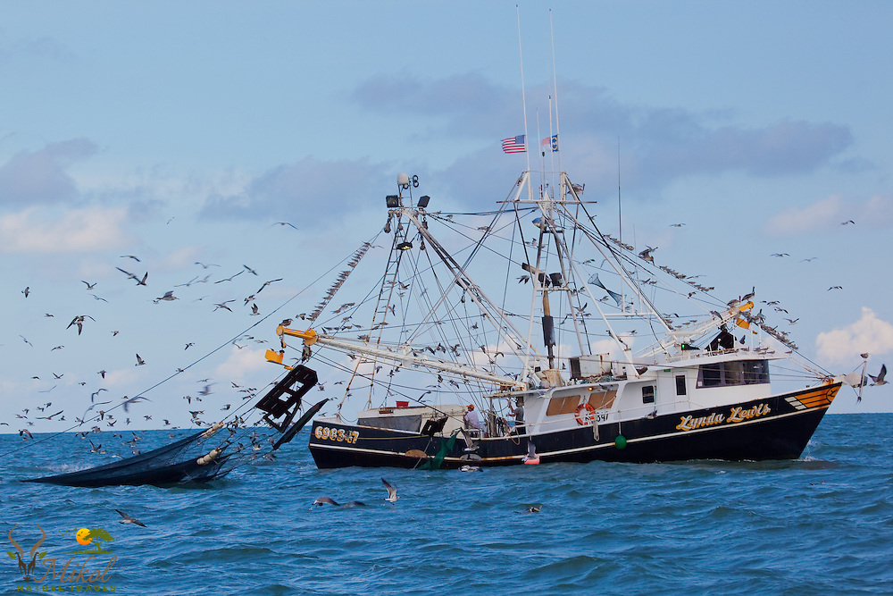 Trawling for shrimp in the Atlantic Ocean off the Grand Strand