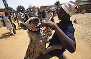 Husa Animist Muslim traveling circus with hyenas. In the Animist religion power is associated with fierce beasts and those who have contact with them. These men and their troop are often called upon for religious ceremonies...The implementation of Islamic Sharia Law across the twelve northern states of Nigeria, centres upon Kano, the largest Muslim Husa city, under the feudal, political and economic rule of the Emir of Kano. Islamic Sharia Law is enforced by official state apparatus including military and police, Islamic schools and education, plus various volunteer Militia groups supported financially and politically by the Emir and other business and political bodies. Fanatical Islamic Sharia religious traditions  are enforced by the Hispah Sharia police. Deliquancy is controlled by the Vigilantes volunteer Militia. Activities such as Animist Pagan Voodoo ceremonies, playing music, drinking and gambling, normally outlawed under Sharia law exist as many parts of the rural and urban areas are controlled by local Mafia, ghetto gangs and rural hunters. The fight for control is never ending between the Emir, government forces, the Mafia and independent militias and gangs. This is fueled by rising petrol costs, and that 70% of the population live below the poverty line. Kano, Kano State, Northern Nigeria, Africa