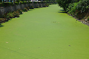 Duckweed Floats On River In Taizhou<br /> A large area of green duckweed floats on the surface of a river on May 29, 2013 in Taizhou, Zhejiang Province of China. <br /> ©ChinaFoto/Exclusivepix