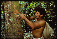 10: AMAZON RUBBER TREE TAPPING