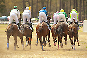 2  April, 2011:  Runners in the C.P & Edith Wills DuBose Cup timber race round the clubhouse turn at Springdale during the 3 mile DuBose Cup timber race.