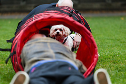 London, October 26 2017. A photographer waits for Alice, a Cavalier King Charles Spaniel/Bichon Frise cross belonging to Labour's Wayne David MP (Caerphilly), to venture into a tunnel at the annual Kennel Club and Dogs Trust Westminster Dog Of The Year competition that sees MPs and members of the House of Lords with their dogs as well as rescue dogs from the Dogs Trust. © Paul Davey