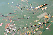 Polluted dirty water - oil, debris and drift wood flout in a polluted body of water