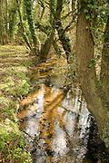 Small lowland stream running through deciduous woodland, Sutton, Suffolk, England