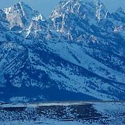Elk, (Cervus elaphus) Teton Montana. Range rises above herd of Elk feeding in National Elk Refuge. Jackson Hole, Wyoming.