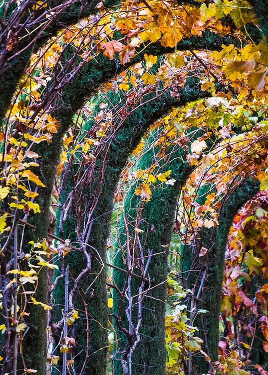 Leaf arcs