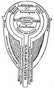 Alhazen (Ibn al-Haytham) c965-c1040. Arab mathematician. Anatomy of the eye from illustration from an edition of Alhazen 'Optica thesaurus', Basel, 1572. Woodcut