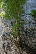 A young Slovenian climber tackles a rock face and tree at Ribcev Laz, on 19th June, in Lake Bohinj, Sovenia.
