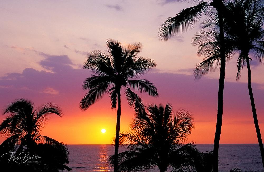 Sunset through palm trees at Hapuna Beach, Kohala Coast, The Big Island, Hawaii