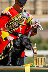 © Licensed to London News Pictures. 08/09/2016. London, UK. Stafford Bull Terrier 'Sgt Watchman V' wins the public vote in Westminster Dog of the Year competition in Victoria Tower Gardens, London on Thursday, 8 September 2016. Photo credit: Tolga Akmen/LNP