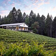 ZFA- Delfino Winery
