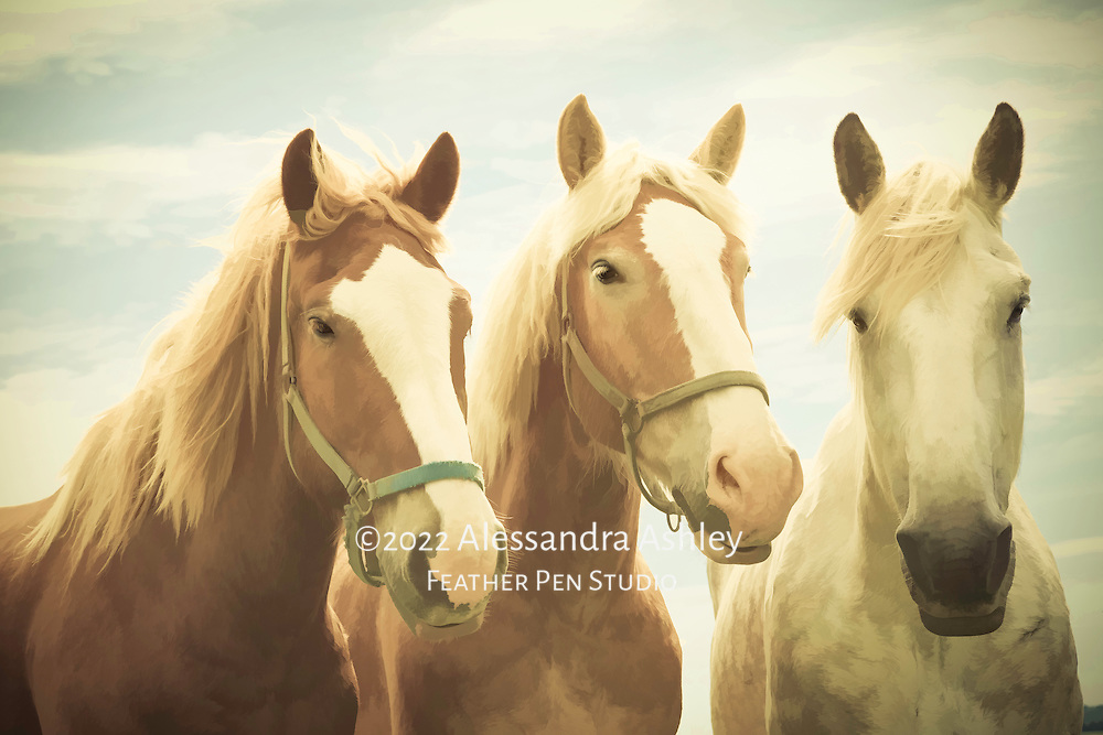 Three horses on a breezy farm in Lancaster County, Pennsylvania's Amish country.  Blend of photorealism and painted effects.