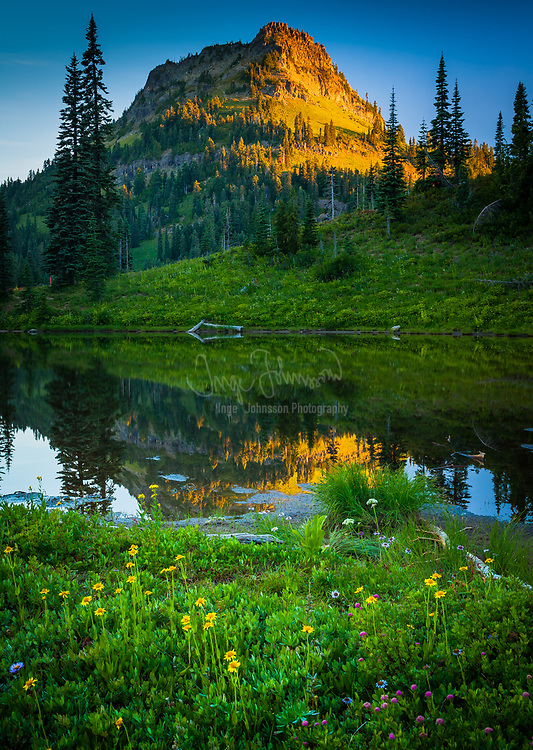 Sunrise in Mount Rainier National Park in Natches Peak trail area near Tipsoo Lake<br /> .....<br /> Tipsoo Lake, at an elevation of 5299 ft (1615 m) above sea level, is an alpine lake within the Northern Cascade Range located near the summit of Chinook Pass in Pierce County, Washington. The area is popular with photographers as the shores and surrounding area abound with the vibrant yellow, orange and purple colors of huckleberry, lupine, Indian paintbrush, and Partridgefoot. There are several hiking trails near the lake that vary in degrees of difficulty and share spectacular views of Mount Rainier and the surrounding landscape.