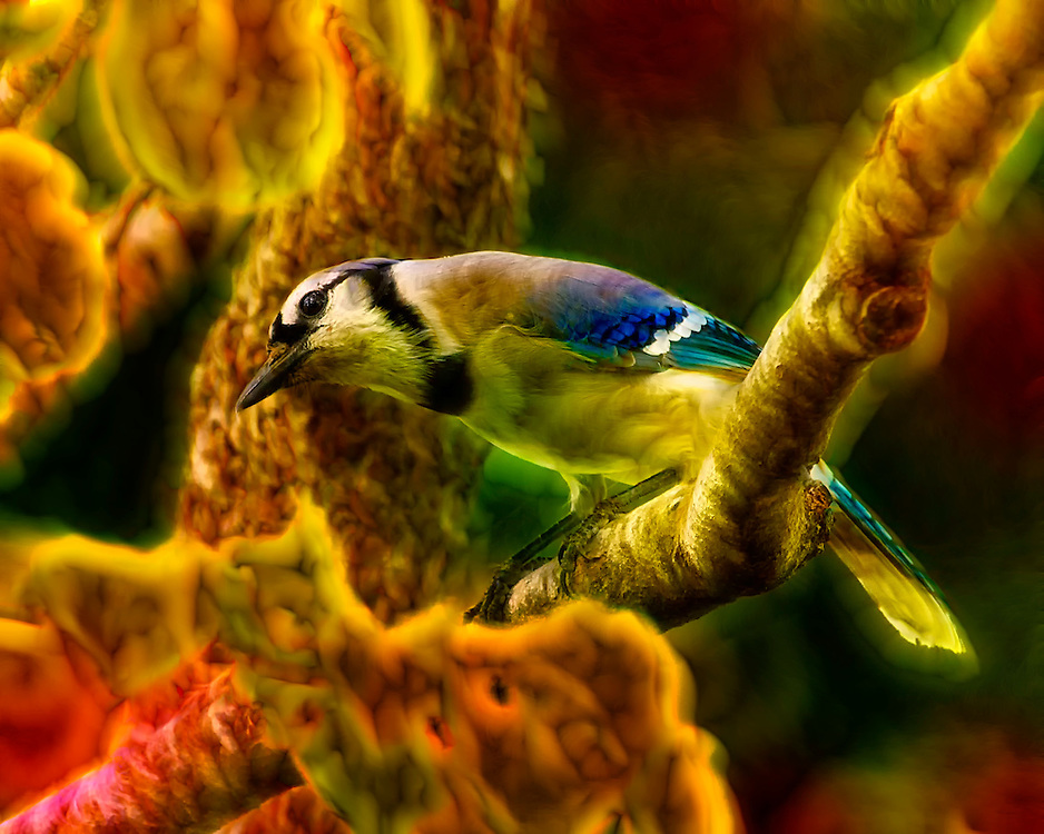 Dreamy visions of a Blue Jay perched in a tree