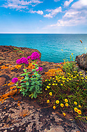 Coast of Silistar protected area at springtime