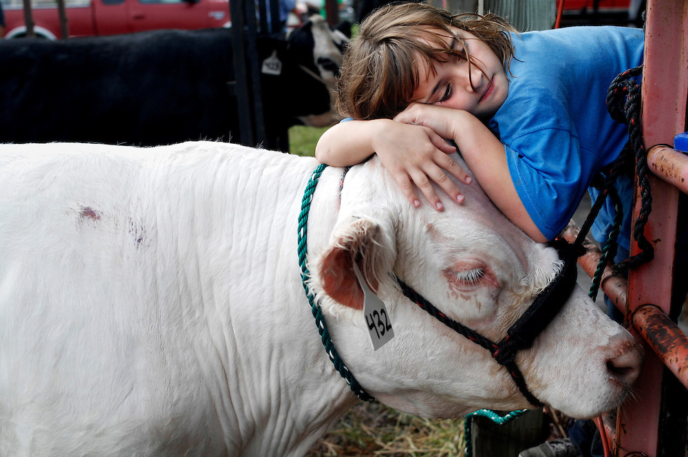 """Sarah Grant, 10, leans on her all-white steer Gabriel after cleaning him for competition. Grant raised the steer from a bottle calf after buying him from the Angell family.  """"He's so sweet,"""" says Grant, """"He doesn't really care if I lay all over him."""""""