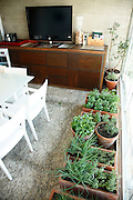 Sao Paulo_SP, Brasil...Na foto uma horta dentro de casa in Sao Paulo...In this photo some plants in the house in Sao Paulo...Foto: SERGIO ZACCHI / NITRO