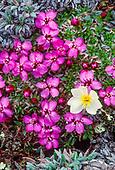 Chukostk Wildflowers