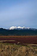 Mount Blandshard of the Coast Range from a blueberry field in Pitt Meadows, British Columbia, Canada