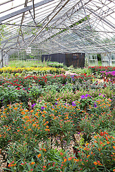 The nursery at Butterfly Jungles showing butterfly friendly plants and butterfly enclosure