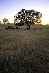 Northern California Field At Dusk