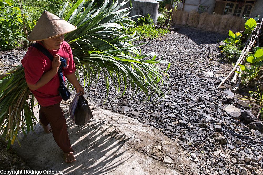 Suparjiyem, 49, walks back home carrying a bundle of grass to feed her cattle. She lives in Wareng, Wonosari subdistrict, Gunung Kidul district, Yogyakarta Special Region, Indonesia.