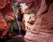Elves Chasm, Royal Arch Creek, Colorado River mile 116.5, Grand Canyon National Park, Arizona, USA; 6 May 2008; Pentax 67II, 55mm lens, Velvia 100