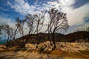Vegetation returning to life in aftermath of bushfire, Wilsons Prom or Wilsons Promontory Marine Park, Gippsland, Victoria, Australia