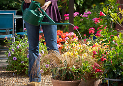 Watering biological control into patio containers