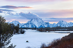 """Grizzly at Oxbow Bend in Grand Teton National Park at sunset. When printed large you can see the trumpeter swans, ducks, geese and a beaver at the open water. Custom prints can be ordered up to 40X60 inches.  It is amazing on aluminum. <br /> <br /> My favorite photo of 2013<br /> <br /> <br /> Contact for custom print options - dh@theholepicture.com<br /> <br /> For production prints or stock photos click the Purchase Print/License Photo Button in upper Right; for Fine Art """"Custom Prints"""" contact Daryl - 208-709-3250 or dh@greater-yellowstone.com"""