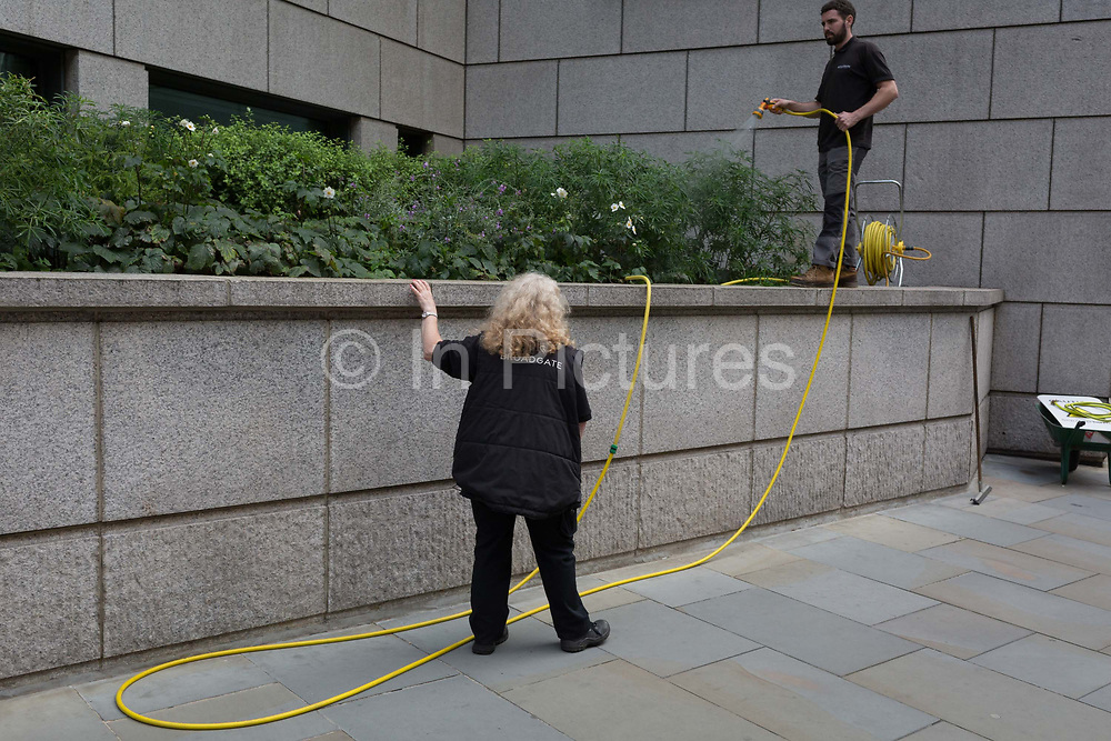 Employees of the Broadgate development water shrubs on Sun Street in the City of London, the capitals financial district - aka the Square Mile, on 8th August, in London, England.