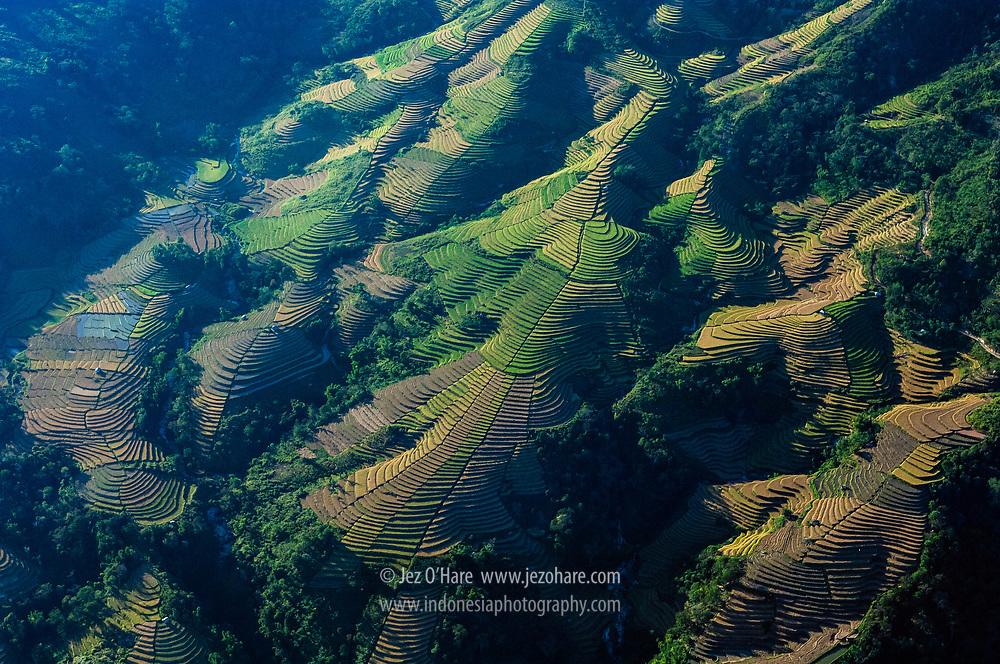 Rice terraces, Manggarai, Flores, East Nusa Tenggara, Indonesia