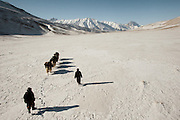 Overview of two Wakhi traders going down to the lower valleys with a yak caravan. .Going back down to Sarhad village with a yak caravan led by 2 Wakhi traders: Shur Ali and Roz Ali...Trekking down the Wakhan frozen river, the only way down to leave the high altitude Little Pamir plateau, home of the Afghan Kyrgyz community.