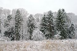 View on a snow covered meadow establishment in the Cresheim Valley named the Cathedral Meadow. The area is part of the Fairmount Park system and offers, amongst other benefits, opportunities for environmental education.