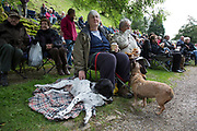 Audience at the Hardraw Scaur Brass Band Festival. A woman with her Great Dane and Border Terriers. Organised by the Yorkshire and Humberside Brass Band Association, the competition is Britain's second oldest outdoor contest and takes place annually in Hardraw Scar in Wensleydale, North Yorkshire, England, UK. The area, a natural amphitheatre, attracts bands from all over the North of England and is a popular event amongst players and audiences alike.