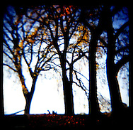 Seasons changing in Prospect Park, Brooklyn.