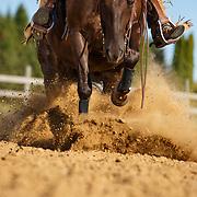 20190730 Western - Reining Horses