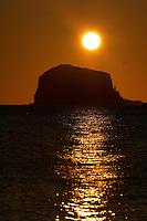 Gannet (Morus bassanus) Colony, Bass Rock at dawn, Firth of Forth.<br /> Scotland
