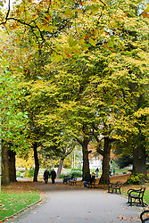 Couple walk Hand in Hand through the Autumn trees of Weston Park Sheffield<br /> 21 October 2012<br /> mage © Paul David Drabble