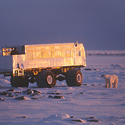 A tourist watching polar bears (Ursus maritimus) from a Tundra Buggy vehicle. Churchill, Manitoba, Canada