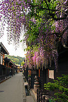 Sanmachi or Furui-machi still stands on the east side of the Miyagawa River flowing through Takayama, this is where Edo period houses remain in traditional buildings where sake breweries and merchants houses.  The district was designated an area of important traditional buildings by the Japanese Government and the movie set for many a Samurai movie.
