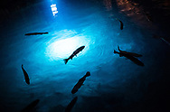 lac souterrain de St Léonard 29 juin 2021 avec Cédric Savioz, directeur<br /> (STUDIO_54/ OLIVIER MAIRE)